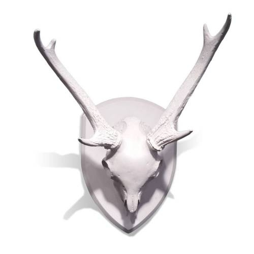 Mule Deer Skull with Antlers on Medallion