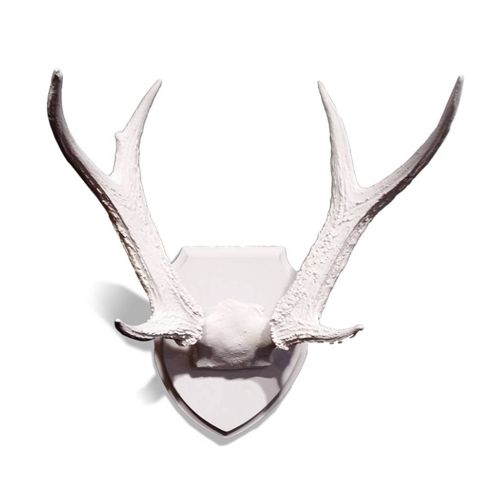 Whitetail Deer Antlers - Wall Decor for your Home