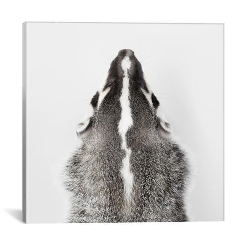 American Badger I
