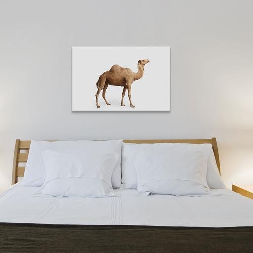 Drom Camel I